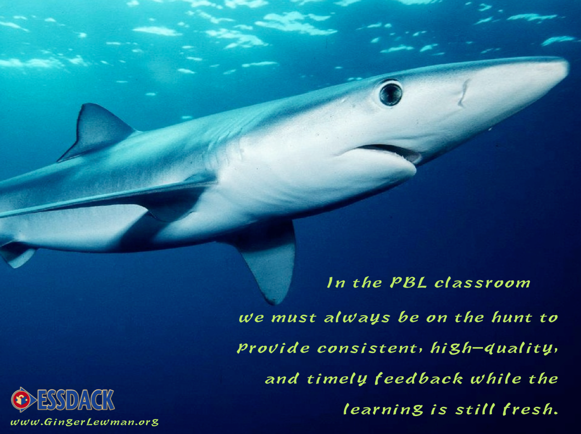 Teachers, This Year, Let's Be Sharks!